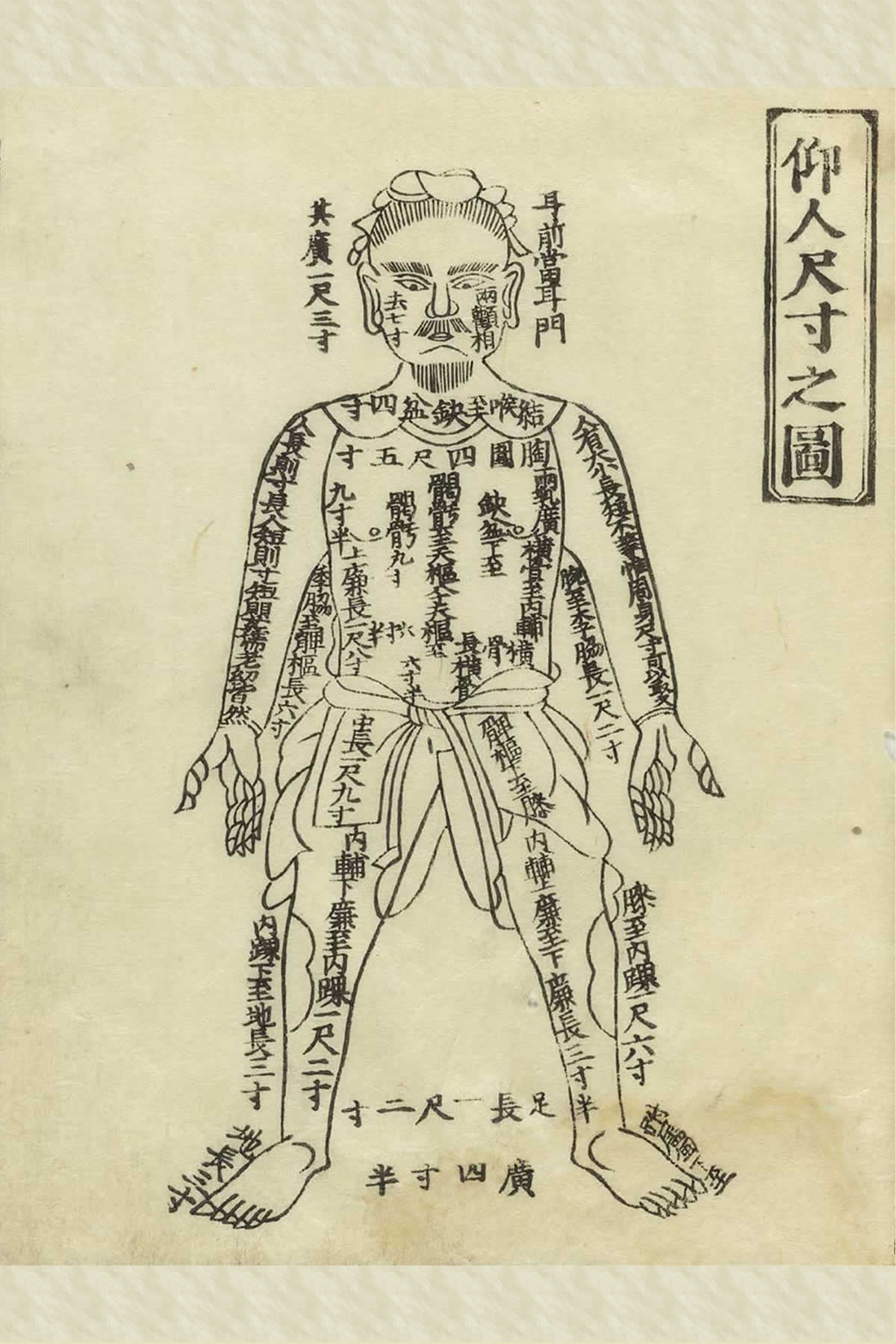 Historical Acupuncture Anatomy Natures Healing