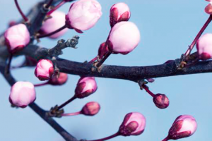 Spring for Traditional Chinese Medicine
