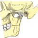 5 Tips for TMJ – Temporomandibular Jaw Pain and Acupuncture